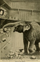 "Image from page 238 of ""Animal Life and the World of Nature; A magazine of Natural History"" (1902)"