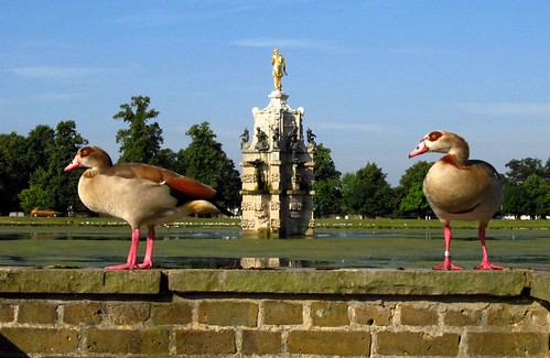 Pair of Canadian Geese by the Diana Fountain