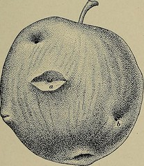 "Image from page 325 of ""[Fruit culture]"" (1912)"