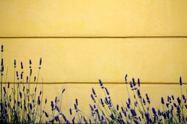 Lavender + tuscany