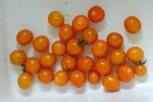 Sungold cherry tomatoes by Eve Fox, the Garden of Eating, copyright 2014