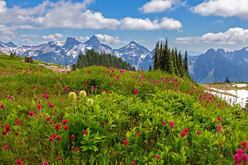 Tatoosh Peaks and Wildflowers
