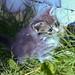 Kittens - 30 ago 2014-60.jpg