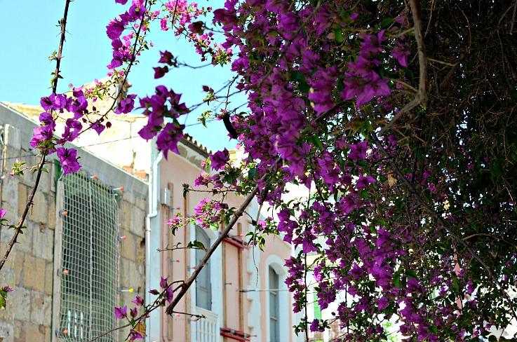 DSC_2713 Ibiza Florals