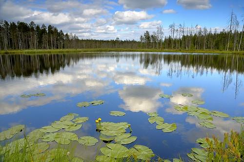 finland pond finnishpond