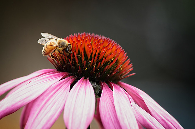 Collecting Pollen