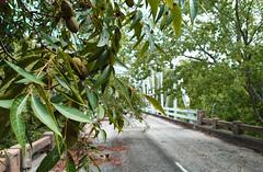 Plum Creek Bridge, Former Old US 90, Luling, Texas 1409151338