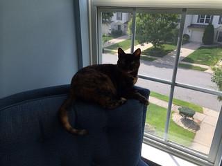 Lulu goes where her chair goes