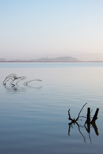 california morning pink blue mountains color reflection tree water silhouette landscape haze pastel branches paloalto sanfranciscobay ripples submerged baylands