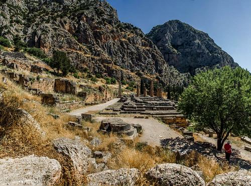 columns delphi greece olivetree templeofapollo delfoi templeofdelphi greece2013 3shotsmergedinphotoshopelements templeofalcmonidae