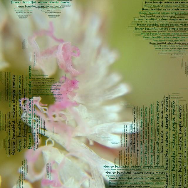 Flower Phoetic
