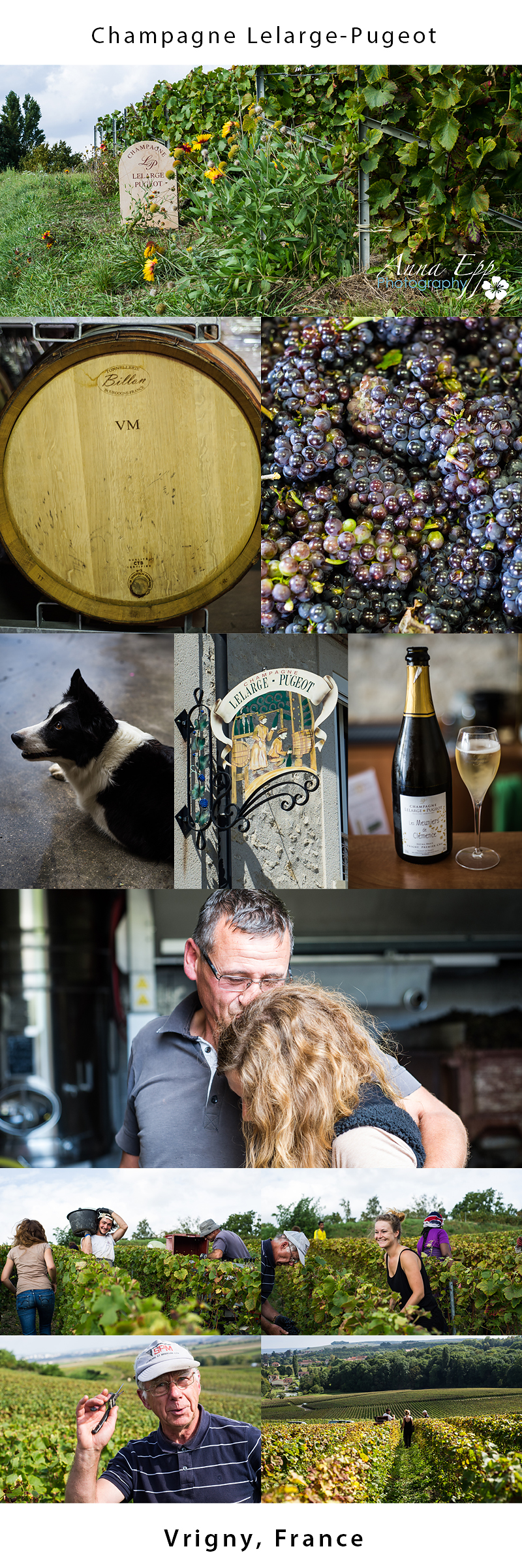 Champagne Lelarge-Pugeot Vrigny, France