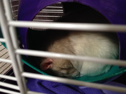 Marshmallow Sleeping