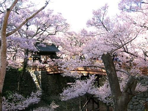 oshiro09高遠城址公園