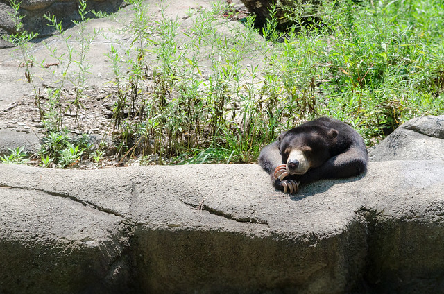 20140823-Cleveland-Zoo-Trip-3373