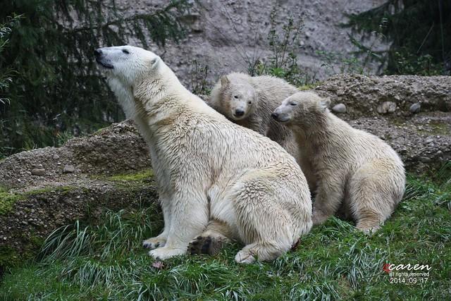 EisbärenGiovanna Nela&Nobby 2014_09_17 341