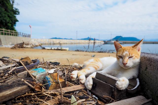 Island Cat #20