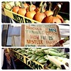 Pumpkins and Sweet Corn from Nistler Farms