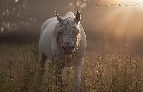 horse sunrise outdoor goodmorning arabianstallion