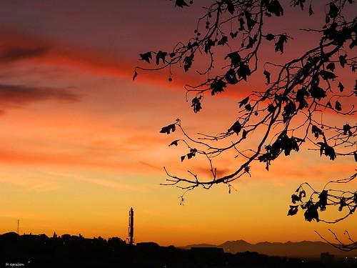 winter light sunset tree clouds southafrica outdoor