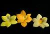 crafting - felt daffodils