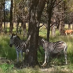 Game park. South Africa