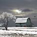 Winter Blues # 2 by Mike Linnihan