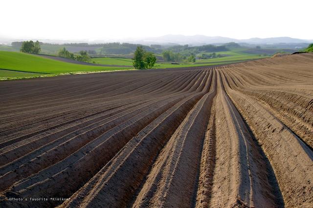 ジャガイモ畑1