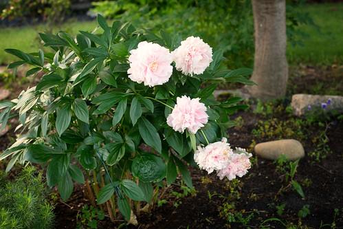 06-14 flowers-3430-Edit