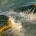 Sealife 4 by Nick Landells