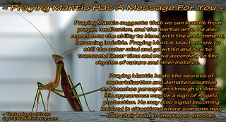 ~ Praying Mantis Has A Message For You ~