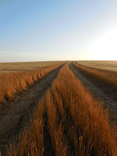 Grain cart path