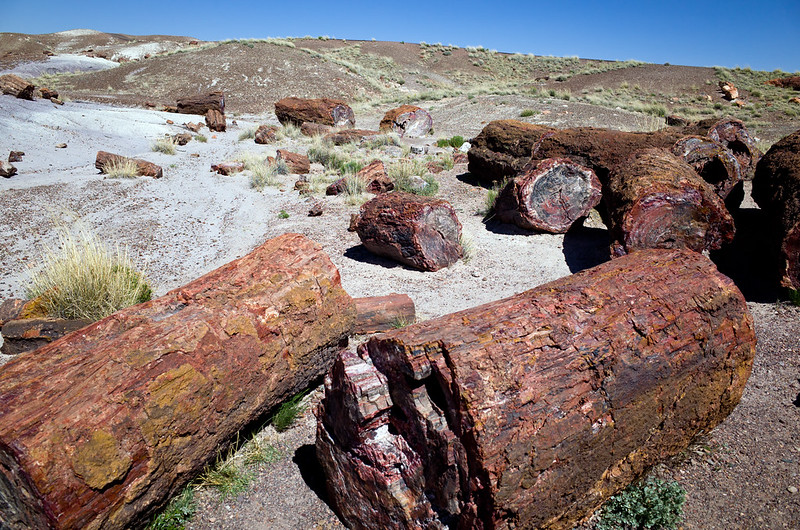 R0001671 - Crystal Forest Petrified Forest