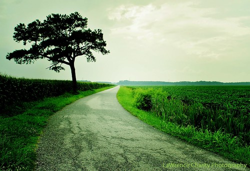 road charity blue tree canon landscape photography eos virginia lawrence ridge va 7d chesapeake canoneos7d lawrencecharityphotography