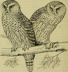 """Image from page 575 of """"Reptiles and birds : a popular account of their various orders, with a description of the habits and economy of the most interesting"""" (1883)"""