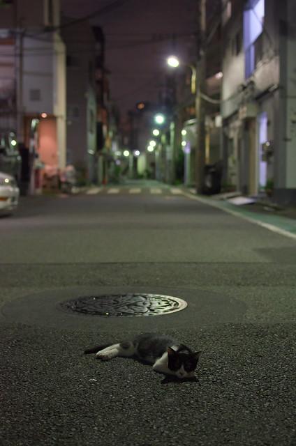 東京路地裏散歩 道の真中で寝転ぶネコ 2014年7月27日