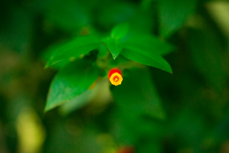 Botanical Conservatory_19