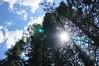 Tuolomne Meadows sunburst