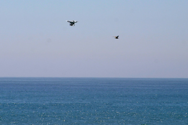 drone and gull