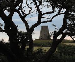 Cleadon Hills - Mill Through Tree