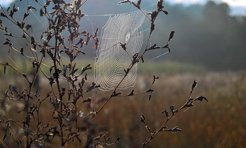 morning spiderweb