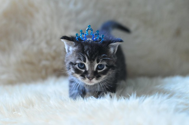 When Should Kittens Start Eating Cat Food