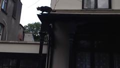 My cat likes climbing!