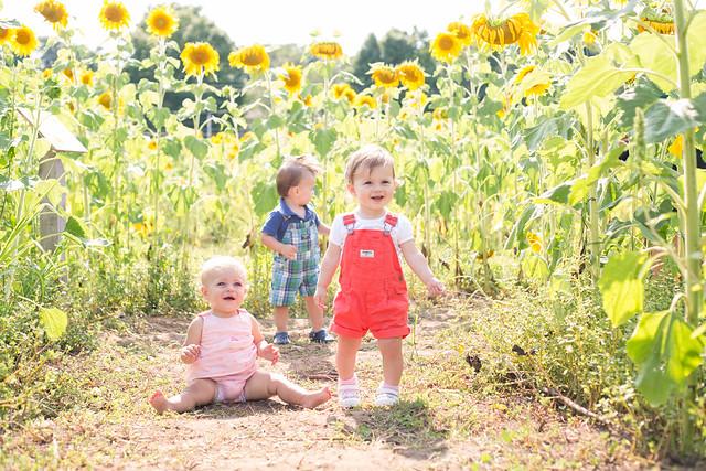 2014-08-08 Sunflower maze-011.jpg