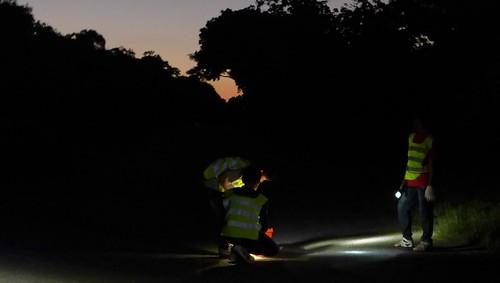 天亮時分,墾丁港口路段的護蟹行動;攝影:陳文姿。