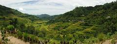 Filipinas. Isla de Luzon- Banaue. Terrazas de arroz