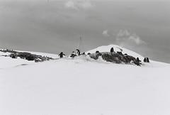Antarctica Lost Film (12)