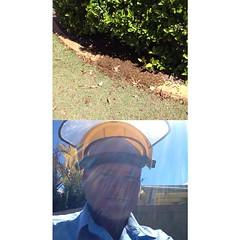 Bee swarm at Tea Gardens #frontback @frontbackapp