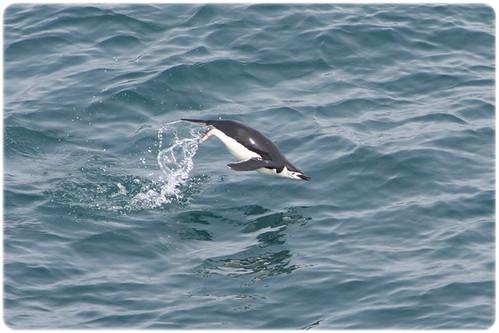 South Shetland Islands (3)