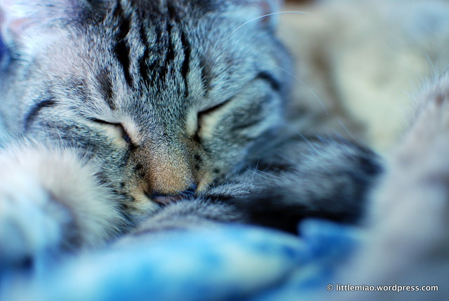 chun naps